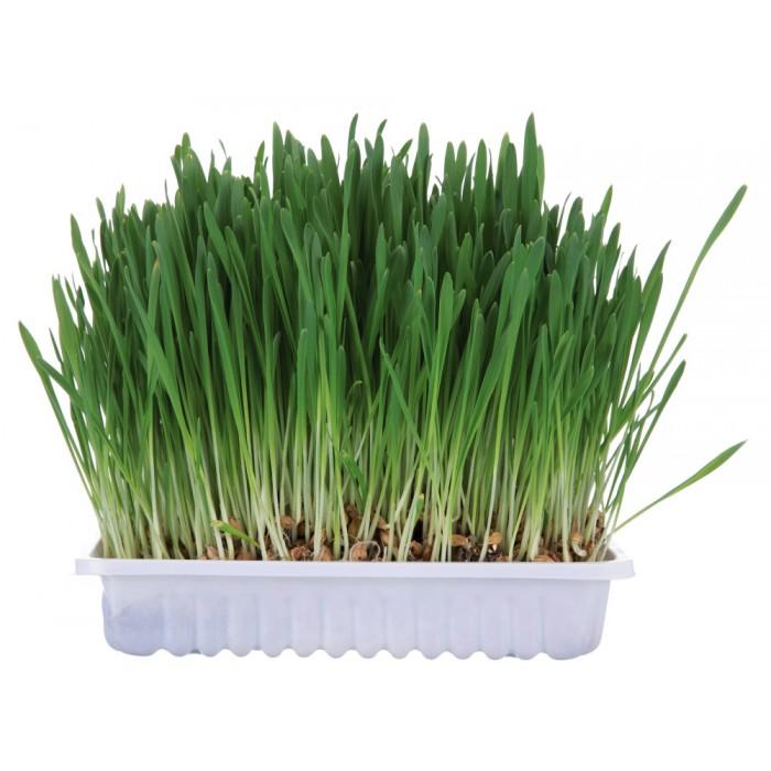 Kasvatettava ruoho kaneille ja jyrsijöille 100g