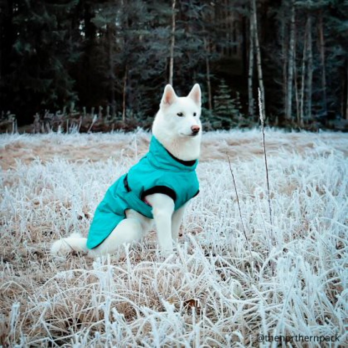 Koiran takki Isa, turkoosi