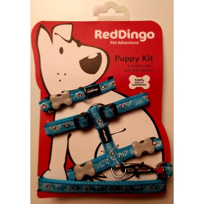 Red Dingo Puppy Pack -panta, talutin ja valjas koiranpennuille